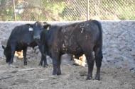 toretes rancho tarahumar - 04