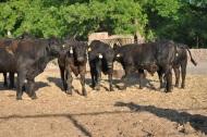 toretes rancho tarahumar - 11