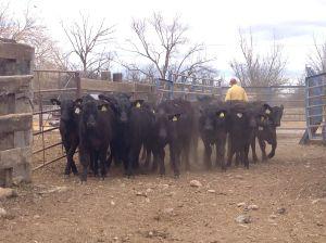 becerras de registro rancho el tarahumar