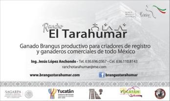 Lona Tarahumar