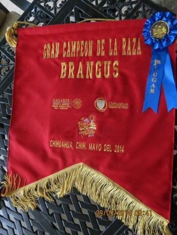 gran campeón de la raza brangus 2014