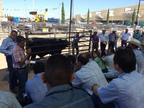 expoagro chihuahua 2015 - 19 de 36