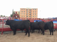 expoagro chihuahua 2015 - 4 de 36
