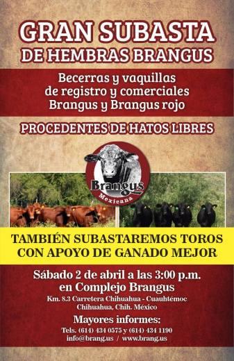 becerras brangus de registro rancho el tarahumar
