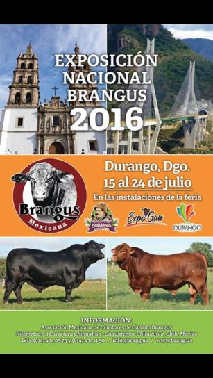 Nacional Brangus en Durango 2016