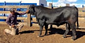 541-5 Mainstay 16 meses 618 kg