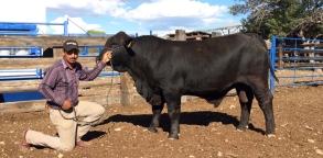 551-5 9305 LeadGunxImprover 15 meses 650 kg