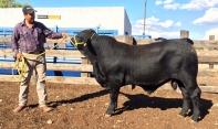 560-5 Mainstay 14 meses 540 kg