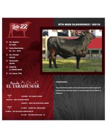 lote 22 RTH MISS ELEGIDOx9021 1651-6 foto 1